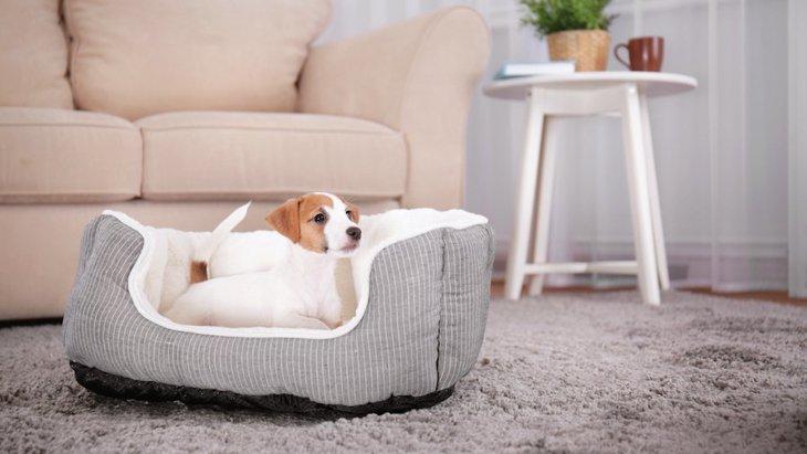 犬の『引っ越しストレス』を和らげる方法3つ