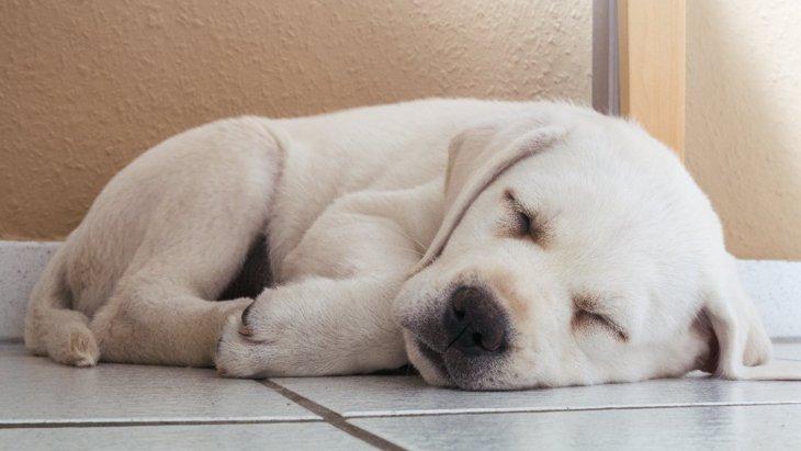 犬が体を丸くして眠る気持ちとは?4つの心理と注意すべきこと