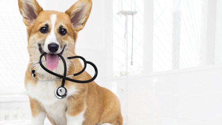 犬は『糖尿病の人』を見分けることができる?