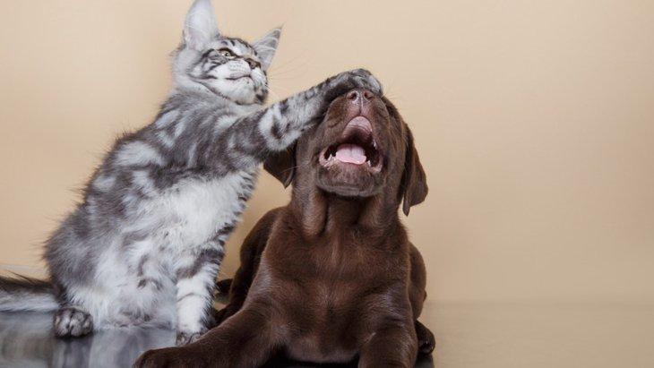 犬と猫、どっちを飼うべき?それぞれの比較やメリット・デメリット