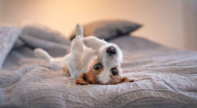 犬が夜に暴れてしまう原因8選!やめさせる対処法やNG行動まで解説