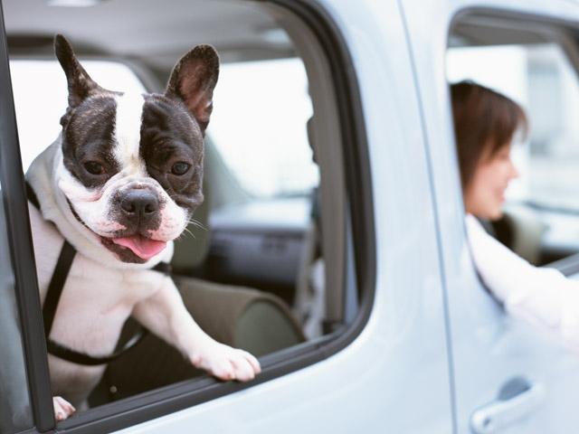 愛犬にお出かけ先でトイレをさせる方法やメリットとは