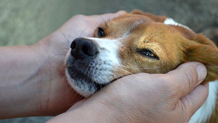 保健所にいる犬の引き取り方について知りたい