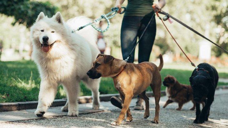 犬の散歩は1日に何分行けばいいの?犬種や体調別の目安を徹底解説