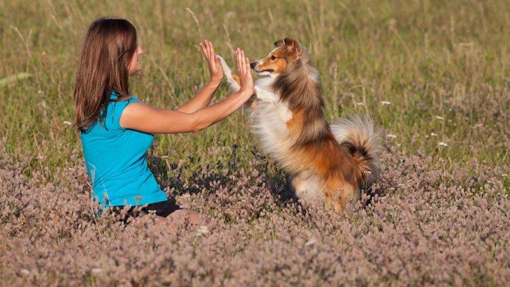 ドッグダンスを犬に教えるメリット4つ