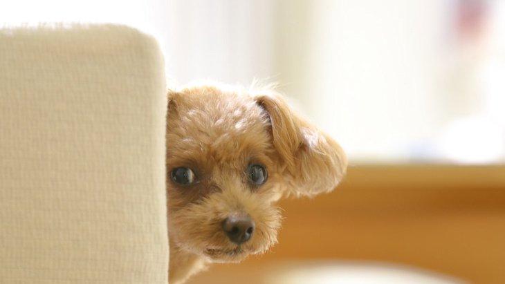 さりげなく視線で合図!犬の目からわかる気持ち5つ