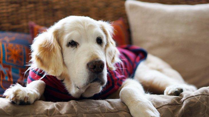 あまり歩きたがらない老犬にも散歩は必要?