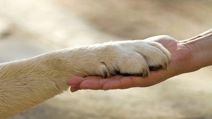 愛犬と信頼関係を築くために注意すべきこととは?