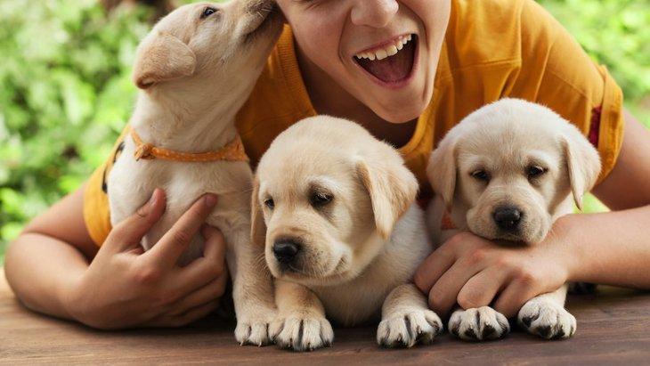 顔?手?犬が舐める場所で異なる心理4選