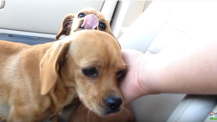姉妹そろって捨てられた?犬との交渉術が光る保護の一部始終