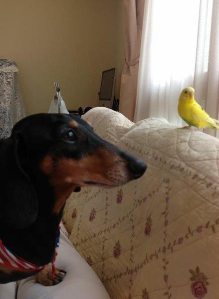 我が家の愛犬と小さな仲間達『犬と他の動物の同居生活』