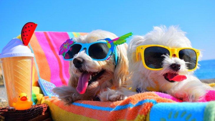 愛犬の夏バテを予防するおすすめ食材4選!ちょっとの工夫で栄養満タン♡