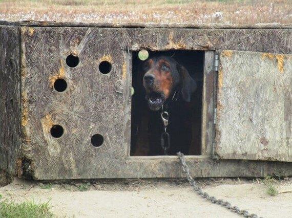 まだ2歳なのにまるで老犬…衰弱しても放置されていた犬をレスキュー