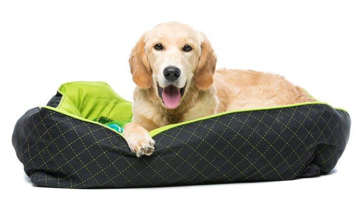 大型犬のベッドのおすすめランキングTOP5!その特徴や価格、注意点など