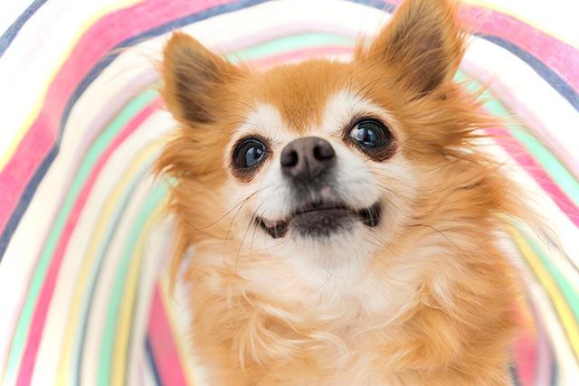 『Pet博2017 in幕張メッセ』開催♪ペット好きなら楽しめること間違いなし!