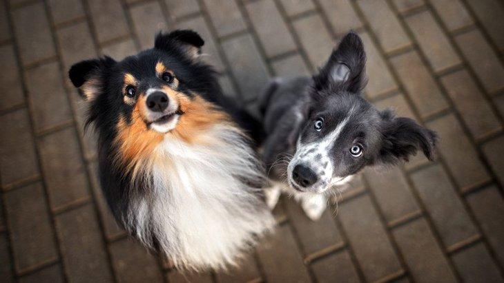 犬が飼い主に理解してほしいと感じている『3つのこと』