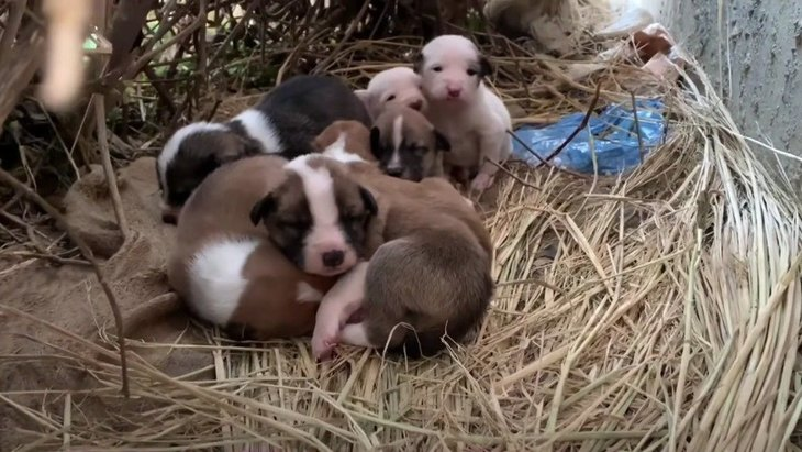 野良子犬達の命を守りたい!野良犬達に出張ワクチン接種!