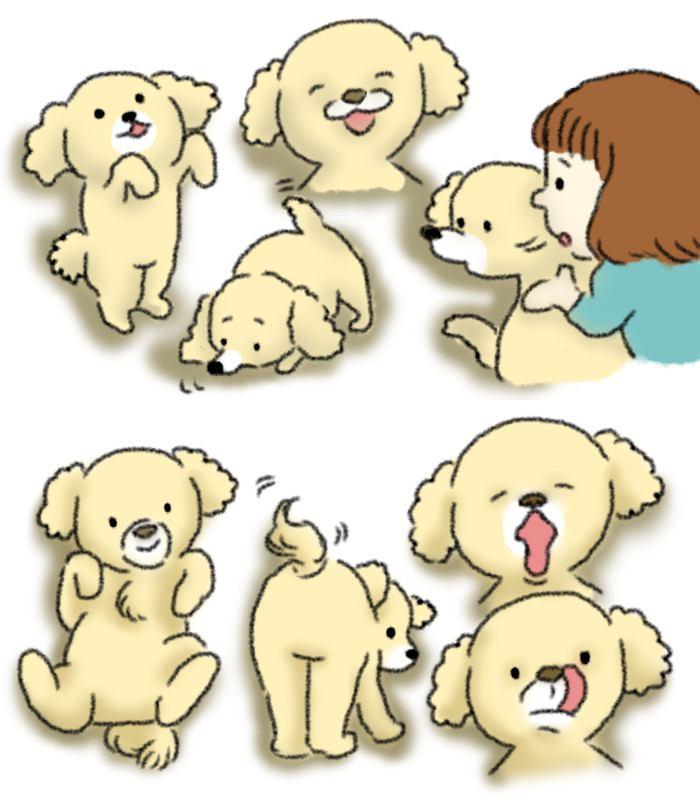 カーミングシグナルって何?見分け方を知って愛犬の気持ちを読み取ろう!