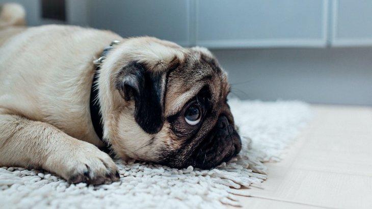 犬は『反省』をするのか?仕草や行動から読み取れる?
