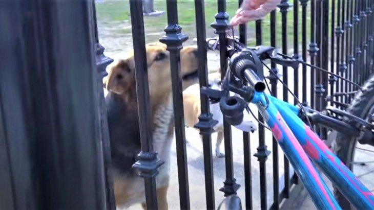 友達に会うために柵を越えてくる犬の保護活動中に投げつけられた石