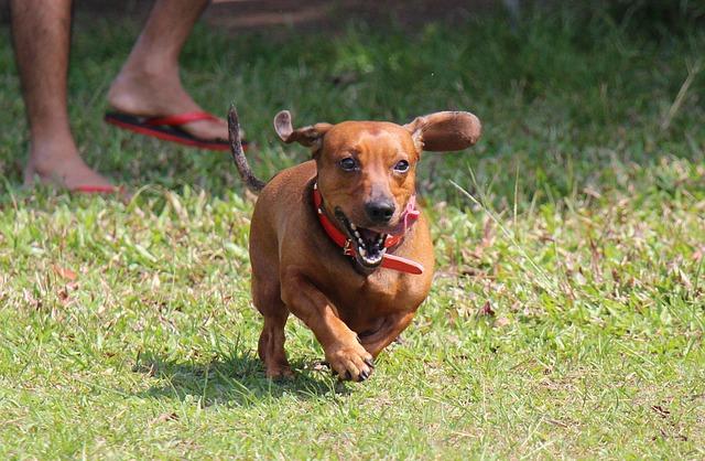 愛犬とジョギングをしてみませんか?