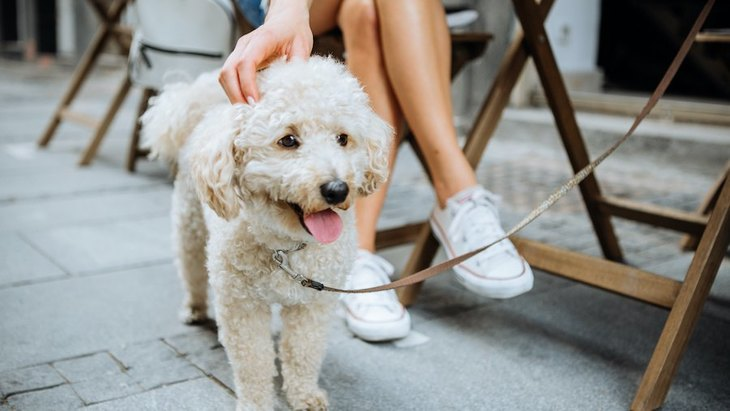 『テラス席のみ犬同伴OKのカフェ』で気を付けるべきこと5選