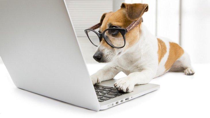 愛犬との生活で困ったらどこに相談すればいい?