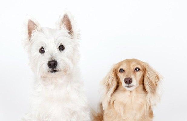犬に『立ち耳』と『垂れ耳』が存在する理由とは?