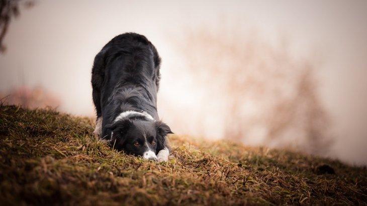 犬がおじぎをする時の5つの気持ち