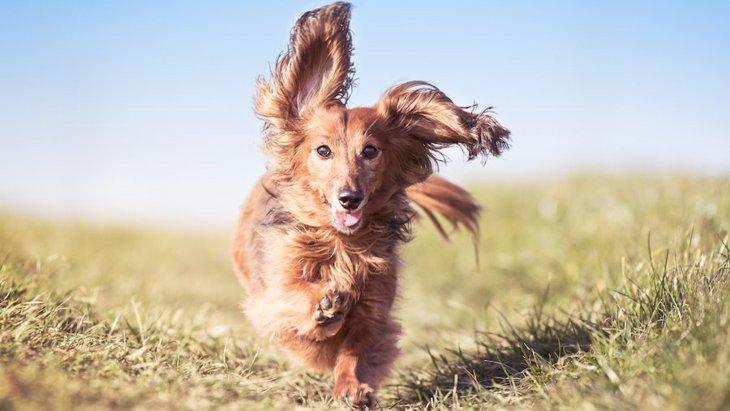 犬が全身を使って大喜びする時に注意したいポイント5つ