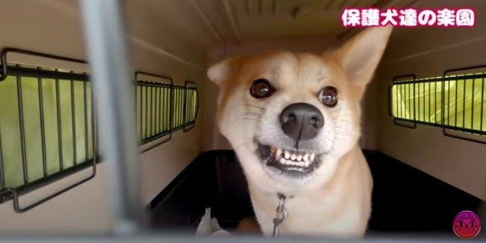 飼い主の指、腕、頬を噛みちぎった犬を保護。未来への第一歩を踏み出す!