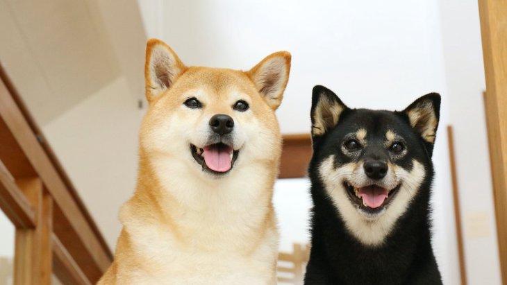 もう一匹犬を飼いたい!相性や犬種で注意するべきこと5つ
