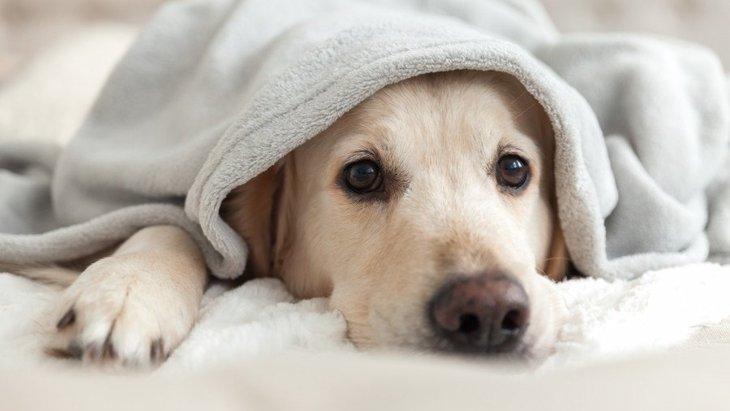 犬が飼い主に『助けて』と言っている時の仕草や行動5選