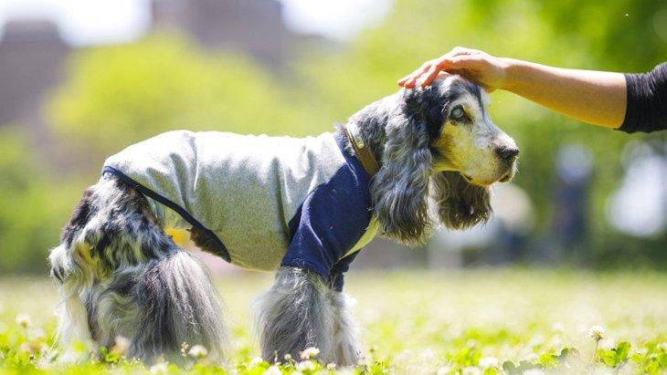 犬の加齢が原因で起こるトラブル6選!なにに気を付けて過ごせばいいの?