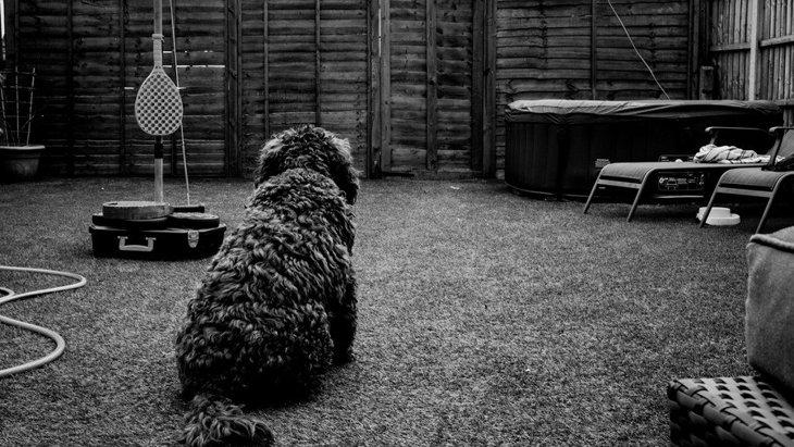 犬が『壁をジッと見つめている』時の心理3選