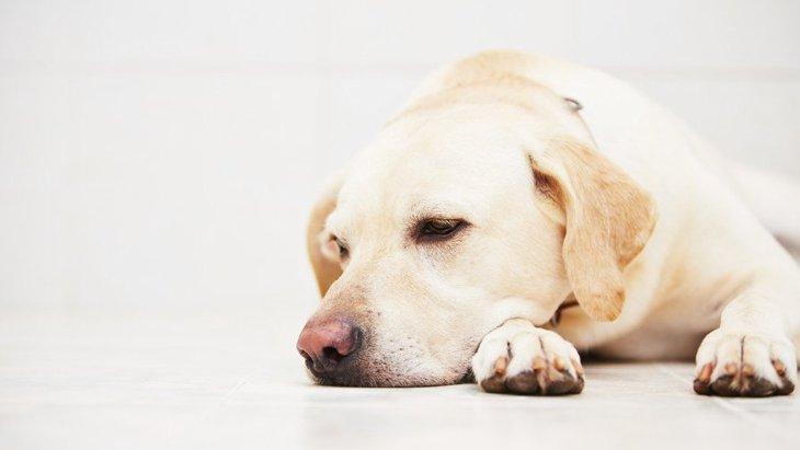 犬が『悲しい目』をしている時の心理4選 正しいスキンシップの取り方とは?