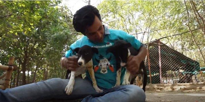 野生動物に襲撃され重傷な姉妹の子犬。ぎりぎりの救助で無事回復!