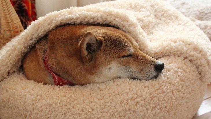犬の老後はどう過ごすべき?子犬の頃から意識しておきたいこと