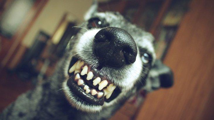 犬が警戒中のときにする行動7つ
