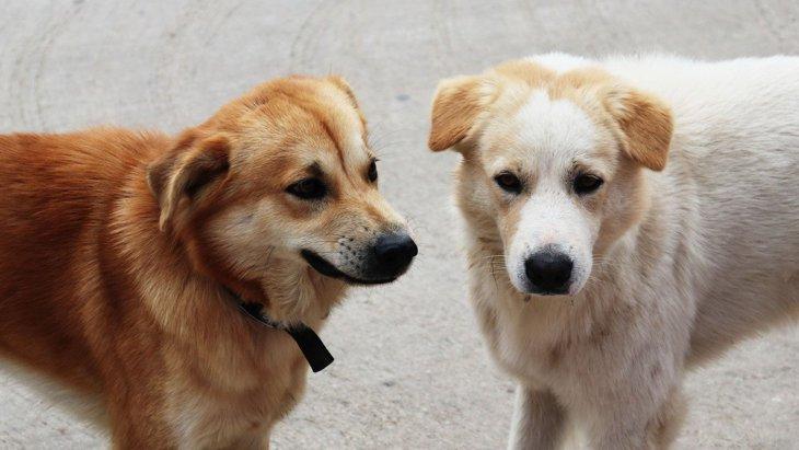 『犬同士が喧嘩』する4つの原因とは?事前対策方法まで