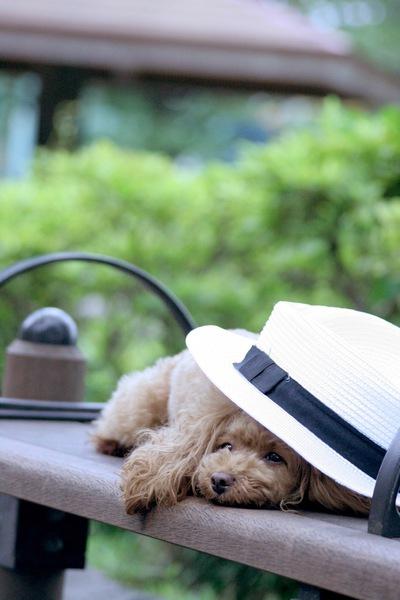 犬の熱中症対策グッズ!散歩を安全にするために