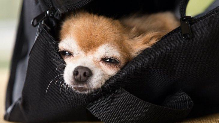 「ドジっ子」の多い犬種4選!溝に落ちる、道に迷う…そこが可愛い♡