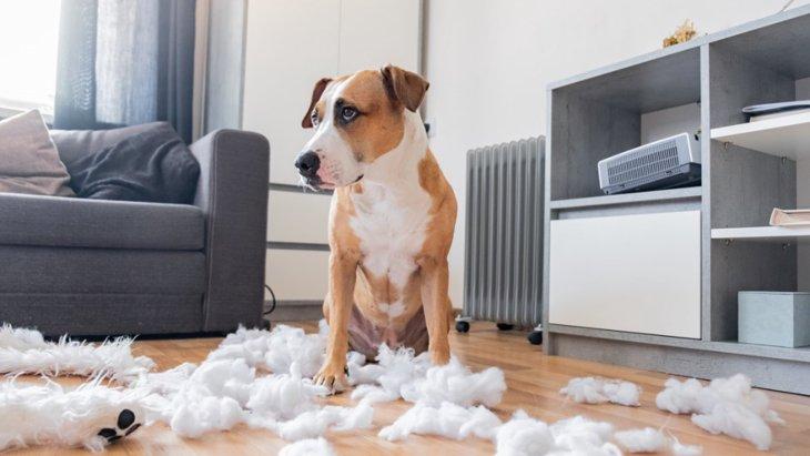 犬が家の中をボロボロにしてしまう原因とは?家具や部屋をキレイに保つための対処法を解説