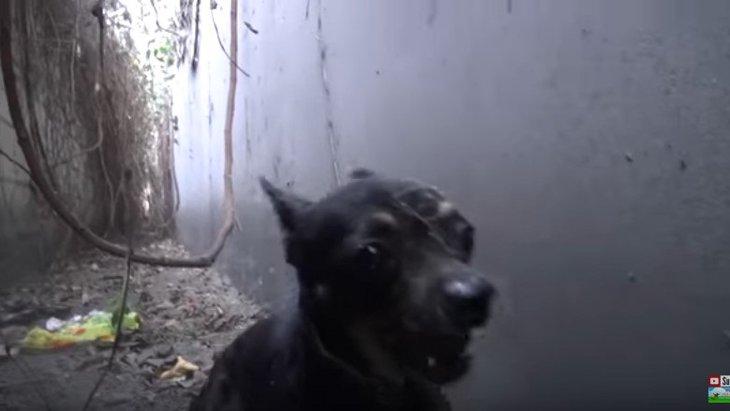 吠えて威嚇して脱兎のごとく逃げ去る小型犬をレスキュー!