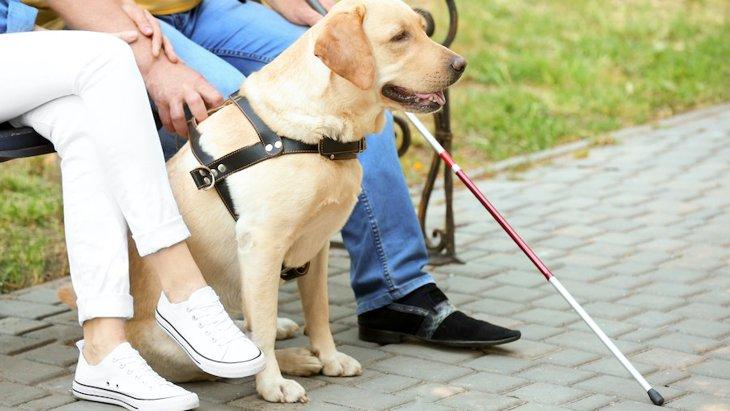 『盲導犬』を見かけた時に絶対にしてはいけないNG行為5選