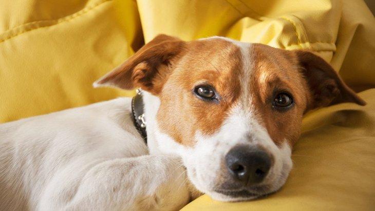 心配…。犬が苦しそうに息をしているときに考えられる原因4つ