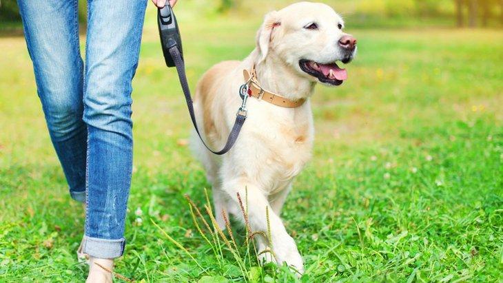 犬の散歩でリードは短く持つべきなの?長く持つべきなの?