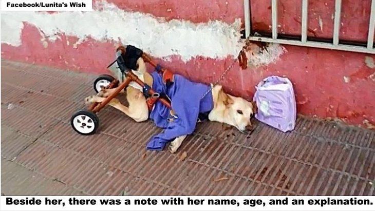 後ろ足が麻痺した犬が繋がれたまま遺棄されていました...