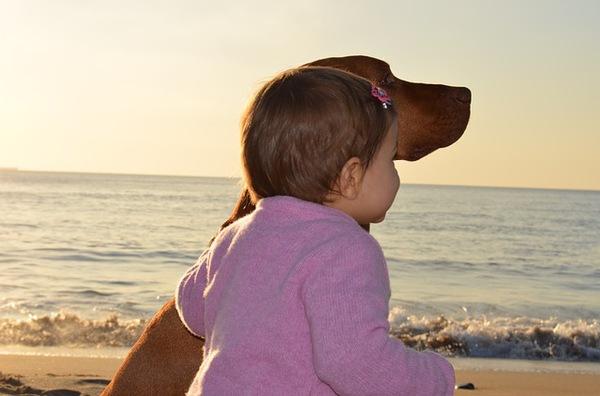 イギリスの諺「子供が生まれたら犬を飼いなさい」