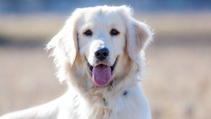 『愛されている犬』の4つの共通点